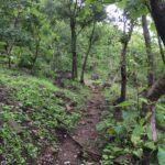 Janapav Kuti Into the Forests