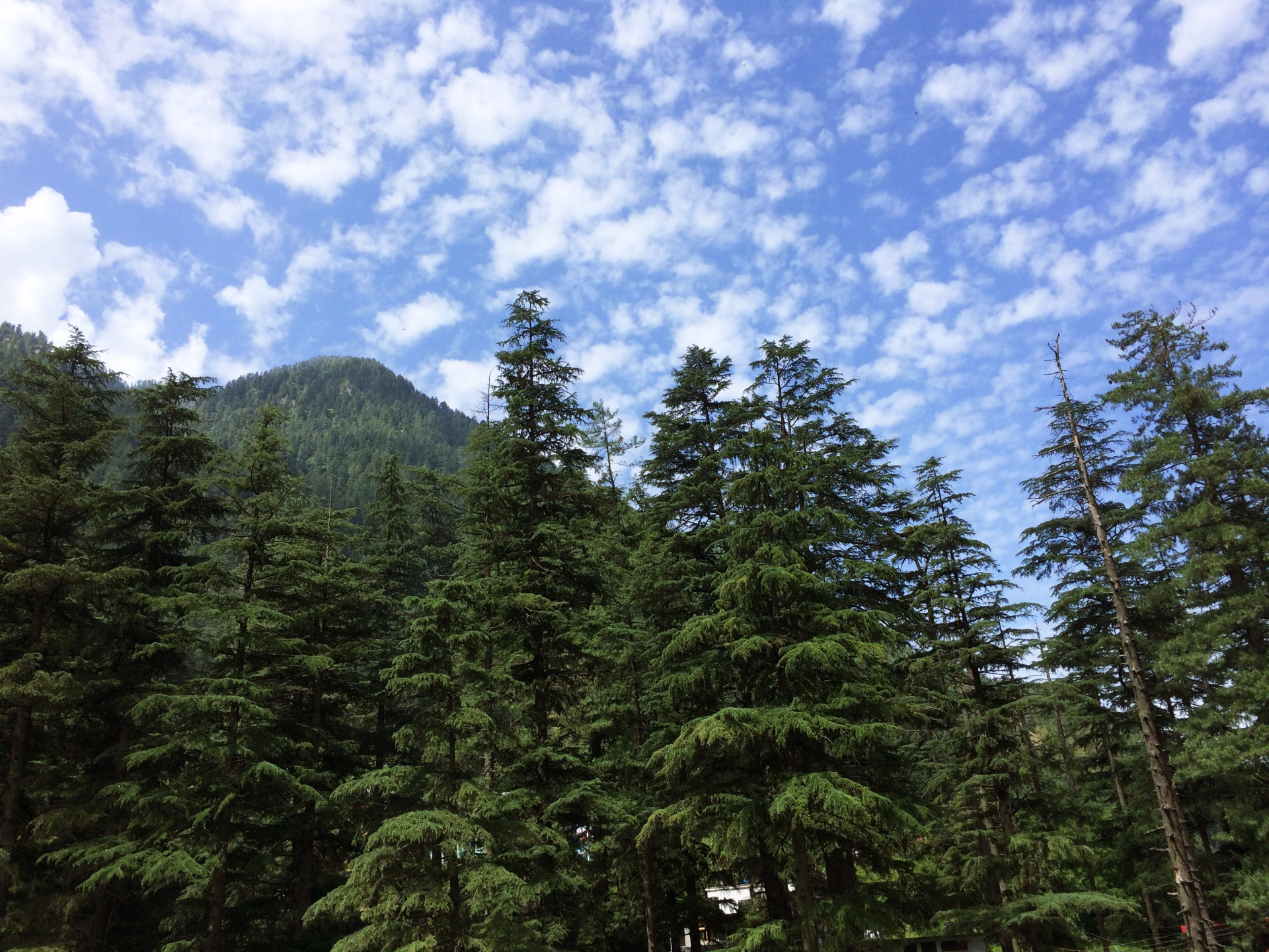 Himachal Scenic Beauty
