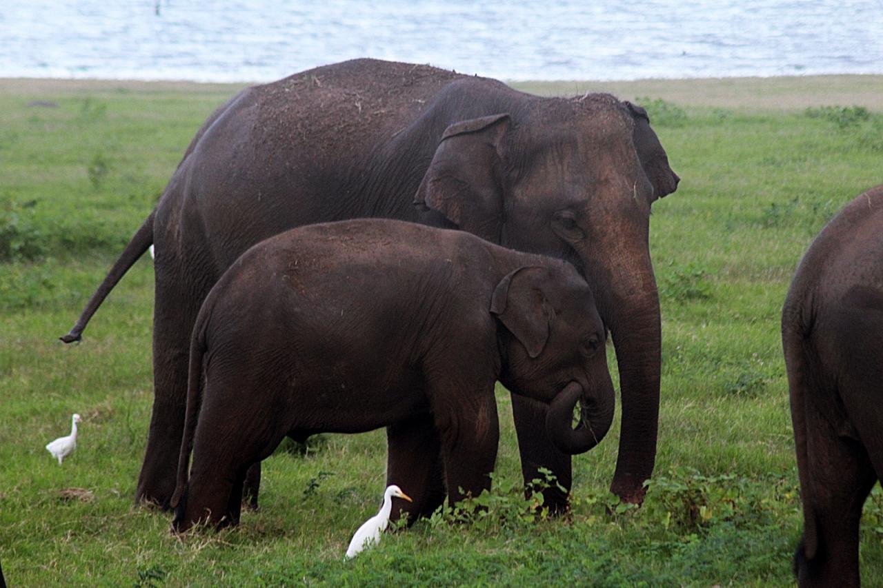 Khaudulla Elephants