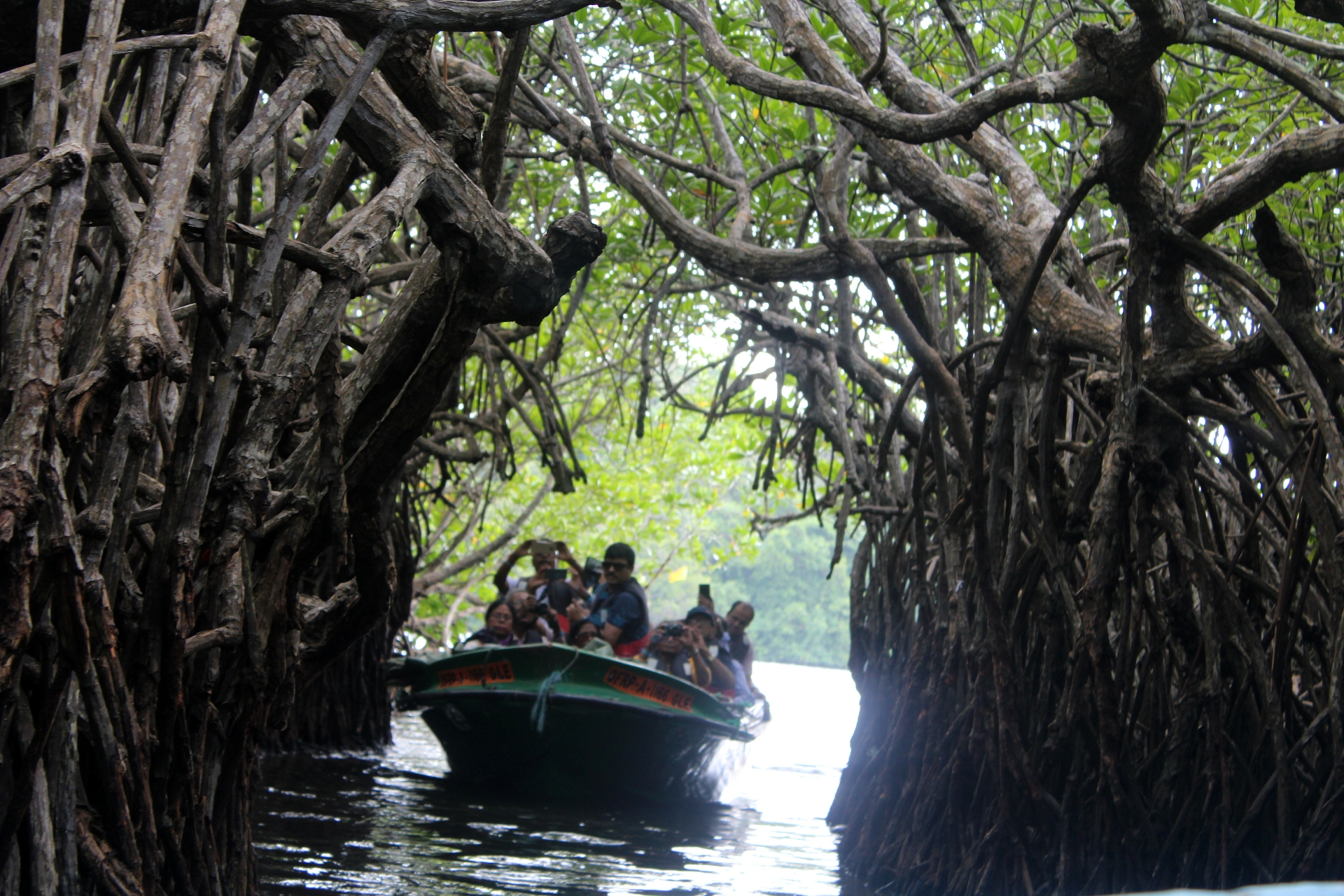 Mangroves Bentota River