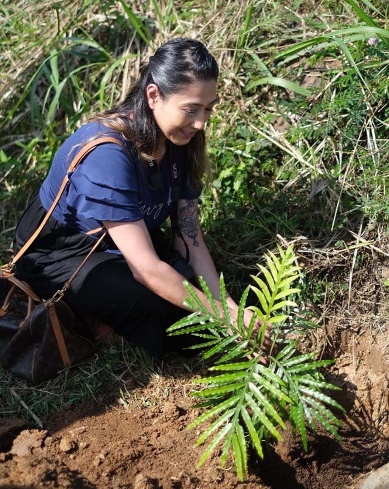 Veidehi Gite Badulla Tree Plantation