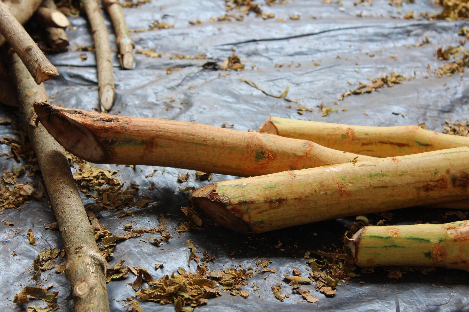 Ceylon Cinnamon Ayagama