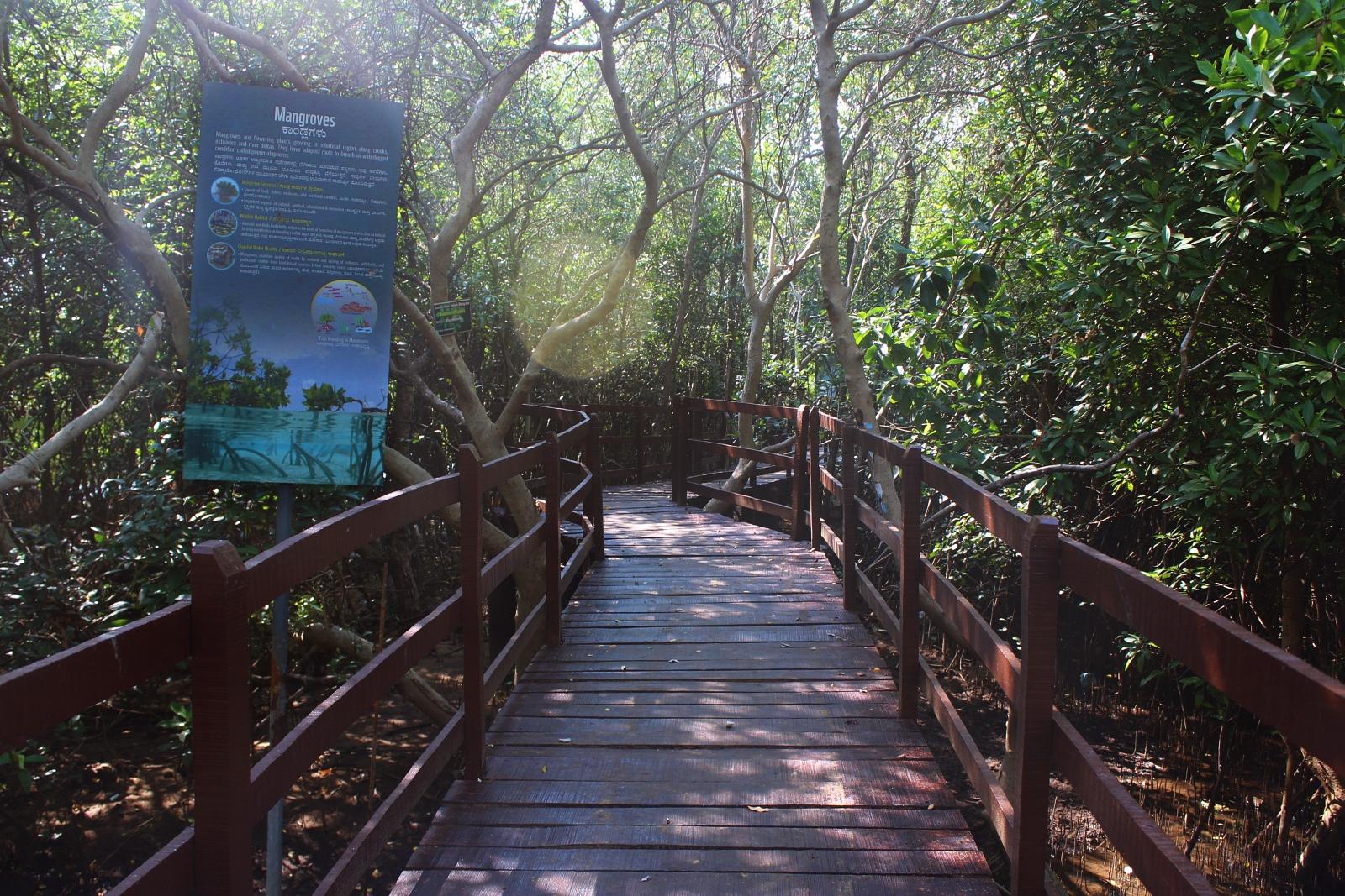 Karwar Mangroves